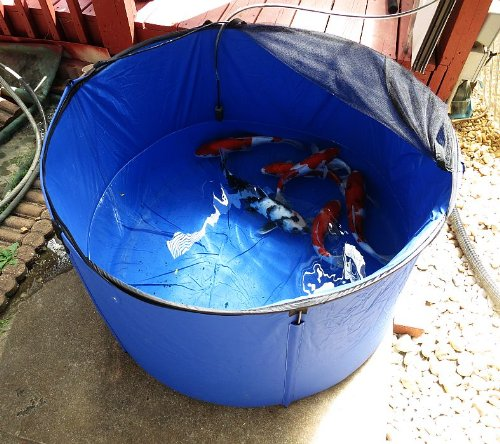 100 gallon flexible folding koi fish tank with cover for for Koi tank size
