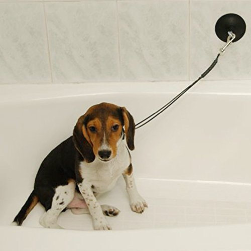 Professional Dog Grooming Supplies
